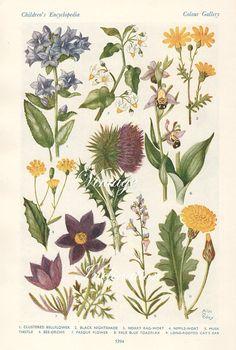 1930s Antique flower art print, double sided floral bookplate prints, botanical flower art illustration