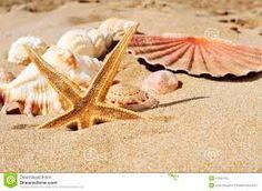 Resultado de imagem para conchas e buzios