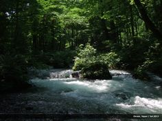 """Rapids through the forest of """"Buna"""" trees and mossy rocks in Oirase Gorge, Japan. Japanese Landscape, Waterfall, Rocks, Trees, Outdoor, Outdoors, Tree Structure, Waterfalls, Stone"""