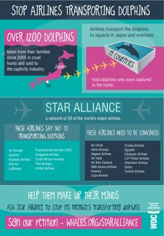Stop airlines transporting dolphins