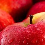 Jak prořezávat jabloně a hrušně - Užitková zahrada Pesto, Watermelon, Menu, Apple, Fruit, Gardening, Food, Menu Board Design, Apple Fruit