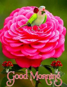 Good Morning Thursday Images, Funny Good Morning Messages, Good Morning Friends Images, Good Morning Sister, Good Morning Happy Sunday, Good Morning Photos, Good Morning Gif, Morning Pictures, Good Morning Beautiful Flowers
