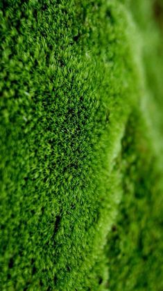 Moss close-up #iPhone #5s #Wallpaper