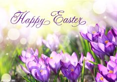 Happy Easter easter easter quotes easter images happy easter easter image quotes easter quotes with images easter greetings Happy Easter Gif, Happy Easter Quotes, Happy Easter Wishes, Inspirational Easter Messages, Easter Wishes Messages, Holiday Messages, Easter Sunday Images, Easter Pictures, Easter Monday