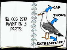 Les aus. Per nens i nenes de 5-6 anys, creat per Marta Padulles (mpr61)