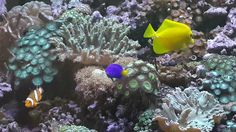 This is a coral tank that my son, Ian Moldenhauer started in his home in Gonubie.
