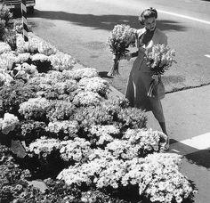 Fashion study by Cecil Beaton, 1950s