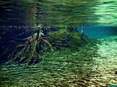 Gainer Springs Reflection: Econfina Creek Canoe Trail, Bay County Florida by Phil's 1stPix, via Flickr