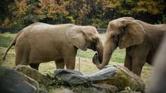 The North Carolina Zoo is the largest natural habitat zoo in the U.S. and a popular attraction for visitors of all ages. Visit Fort Bragg Leisure Travel Services for information. http://www.fortbraggmwr.com/recreation/leisure-travel-services/