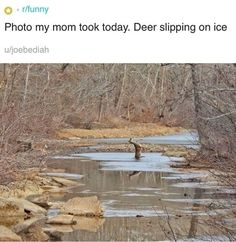 "These 77 posts were deemed worthy enough to top this year's ""Funny"" section, and for once, we actually have to agree with them. Funny Animal Memes, Cute Funny Animals, Funny Animal Pictures, Funny Cute, The Funny, Funny Memes, Hilarious, Stupid Funny, Funny Stuff"