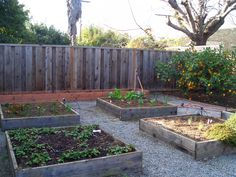 Ten tips for vegetable gardening during a drought - Green Blog ...