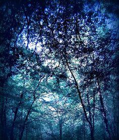#blue #wood by Tiziana Rinaldi