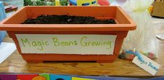 What a magical time we've been having this week watching our Magic Beans grow. After planting the beans on Monday they grew a bit e. Preschool Garden, Preschool Ideas, Fairy Tale Activities, Traditional Tales, Traditional Literature, Fairy Tales Unit, Fairy Tale Theme, Jack And The Beanstalk, Tall Tales