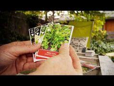 Wild Edibles Playing Cards (plus bonus eBook)