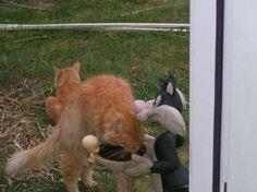 Thumper meeting Sylvester