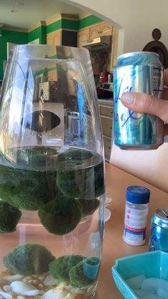 Marimo moss balls are easy to care for - here are my 6 simple tips and tricks to keep them healthy. Marimo Moss Ball Terrarium, Garden Terrarium, Garden Plants, House Plants, Garden Beds, Cactus Terrarium, Succulent Planters, Fruit Garden, Succulents Garden