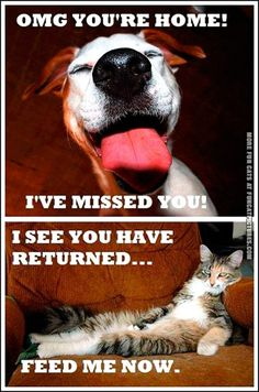Difference between dogs and cats.... One of the many reasons why I love my dog and don't care for cats!