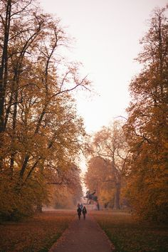 The Golden Hour, Kensington - The Londoner Autumn Aesthetic, City Aesthetic, London Dreams, Kensington, Autumn Scenery, London Pubs, Autumn Cozy, Autumn Photography, Best Seasons