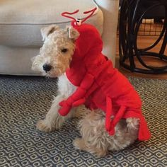 Our #MCM goes to Norman the Lobster. Norman's here to remind you about our upcoming Ghouls Gimlets & Grrrowlers event on October 26. It's totally FREE and will feature games and raffles refreshments treats and a costume contest for the pups. Don't be late!