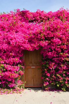 These images are part of a larger series of images where pink is the central theme or subject. Beautiful Flowers Garden, Amazing Flowers, Pretty Flowers, Beautiful Gardens, Flower Aesthetic, Plant Decor, Garden Landscaping, Outdoor Gardens, Planting Flowers