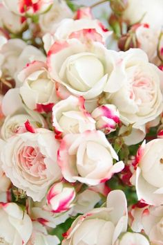 It's soooo HOT, pink. | ZsaZsa Bellagio - Like No Other