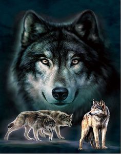 Home Wall Art Decor Lenticular Pictures, Wolves Collection Holographic Flipping Images Unicorn Pictures, 3d Pictures, Wolf Pictures, Wolf Spirit, Spirit Animal, Wolf Eyes, Wolf Artwork, Wolf Images, Wolf Wallpaper