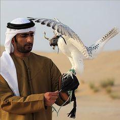 If It's Hip, It's Here (Archives): Formal Falconry. Tiroler Goldschmied's Exclusive Diamond-studded Hawk's Hoods in Abu Dhabi. Northern Goshawk, Gyr, Peregrine Falcon, Cheetahs, Big Bird, Birds Of Prey, Bird Watching, Ancient Art, Bird Feathers