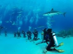 Stuart Cove Shark Dive-sounds really cool, and something that needs to be on my bucket list! Shark Diving, Scuba Diving, Sharks, Atlantis Bahamas, Nassau Bahamas, Leagues Under The Sea, Some Beautiful Pictures, Mexico Vacation, Snorkeling