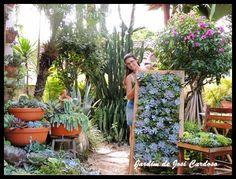 Jardim de Josi Cardoso