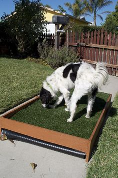 """DIY- Dog potty patch. I know these seem silly to many, but our goofy dog keeps soiling our porch & stairs because she won't go down & pee in the yard if it's raining, etc. This seems like it might be a good solution. If she's going to pee on the porch, maybe she'll at least use a """"potty patch"""" instead."""