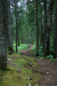 Superior Hiking Trails, Northeastern Minnesota.  Heading up the hills off the shoreline are the Superior Hiking Trails, an elaborate system of well marked trails that follow stony creeks, rock shelves, meadows and dense woodland.  Lake Superior, Wisconsin.