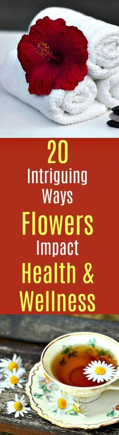 20 Intriguing Ways Flowers Impact Your Health and Wellness https://www.urbannaturale.com/flowers-20-intriguing-ways-flowers-impact-your-health-and-wellness/ Flowers have the ability to stimulate the senses—they're both pleasing to look at as well as to smell their soft fragrances. But did you know that #flowers can also have profound impacts on your total #health and #well-being? #flowers #herbs #plants #wellness #healing #health