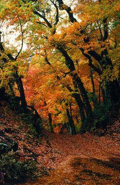 Bosque de Robles #pinChile #landscape