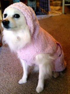 Snowbaby Dog Hoodie - Pink at BaxterBoo