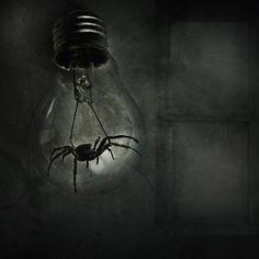 Spider bulb #art