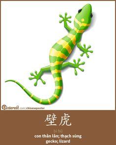 壁虎 - bìhǔ - con thằn lằn - gecko