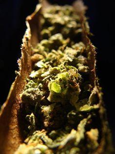 #legalizace #ganja #herb #weed #pot #marijuana #maryjane