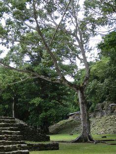 Ruinas de Yaxilan Chiapas