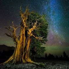 Patriarch Grove, Ancient Bristlecone Pine Forest, CA One of the oldest trees in the world alongside some of the oldest light in the world. The stars in this picture are from the northern end of the Milky Way. The air glow provides a nice green tint in the sky. Considering that I nearly left the area as soon as I arrived due to altitude sickness, I'm glad I stuck around long enough to take a few shots. It was a beautiful area: silent, serene, and surreal…