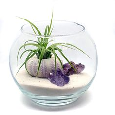 Excited to share the latest addition to my shop Purple Terrarium Kit Kit Includes 1 Purple Sea urchin 1 Tillandsia Air Plant 2 Small Amethyst Clusters 4 Glass Bubble Te. Decor Terrarium, Air Plant Terrarium, Garden Terrarium, Succulents Garden, Small Terrarium, Succulent Planters, Hanging Planters, Cactus Plants, Terrarium Tank