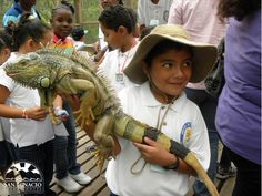 Why don't you enjoy a eco-friendly tour at the Green Iguana Conservation Project?