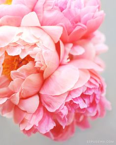 Image of Peonies Forever
