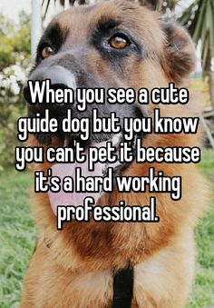 """When you see a cute guide dog but you know you can't pet it because it's a hard working professional."""