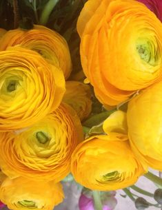 Ranunculus - Available in a rainbow of colors, having multiple layers of delicate, crepe paper thin petals and delicate fern-like foliage Little Flowers, My Flower, Fresh Flowers, Beautiful Flowers, Potager Bio, Ranunculus Flowers, Crepe Paper, Mellow Yellow, My New Room