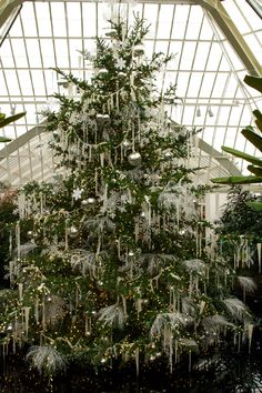 Beautiful all white decorated Christmas tree at The Victoria Room of the Phipps Conservatory. Beautiful Christmas Trees, Merry Christmas To All, Noel Christmas, Little Christmas, Winter Christmas, All Things Christmas, Vintage Christmas, Christmas Trees For Sale, Silver Decorated Christmas Trees