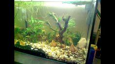 reponse sur l aquarium piranha ...