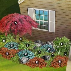 shade garden plan for north region featuring Japanese maple, male fern, pachysandra, hosta, New Guinea impatiens, Virginia sweetspire