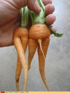 Something was going on in that carrot bed!