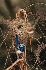Nicolas Day - nature in art - Small Birds, Little Birds, Cute Creatures, Beautiful Creatures, Bird Bedroom, Hawk Bird, Australian Animals, Watercolor Bird, Bird Species