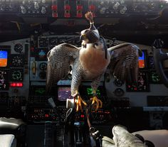 Air Force Academy falcon perches on the throttle control of a Stra… A U. Air Force Academy falcon perches on the throttle control of a Stratotanker Air Force Reserve, Air Force Academy, Air Force Bases, Military Photos, Nose Art, Aviation, Aircraft, Lion Sculpture, Jets
